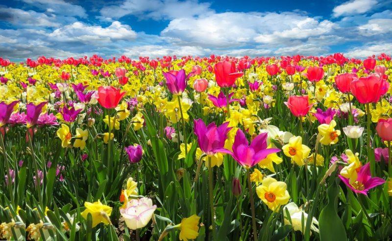 Nutrición macrobiótica en Primavera